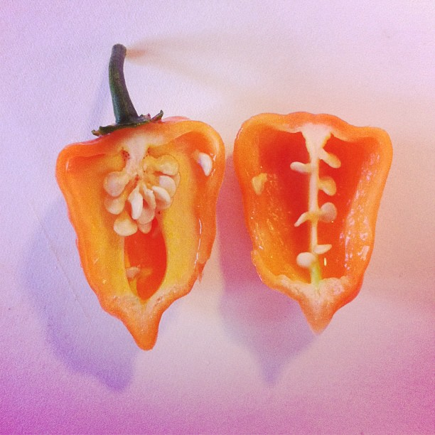 Adoboloco Farms Habanero Cut in Half