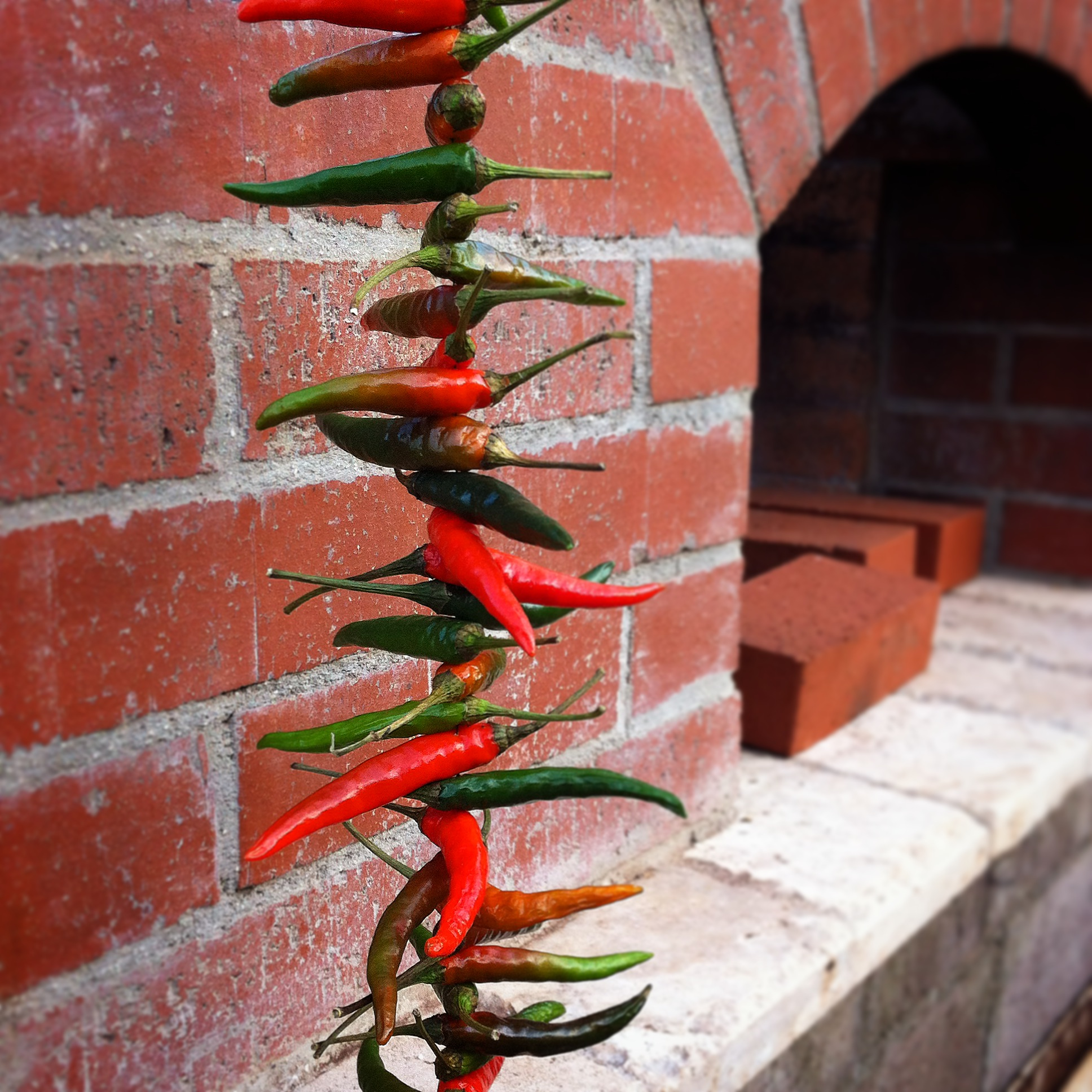 Thai Chili drying for seed saving