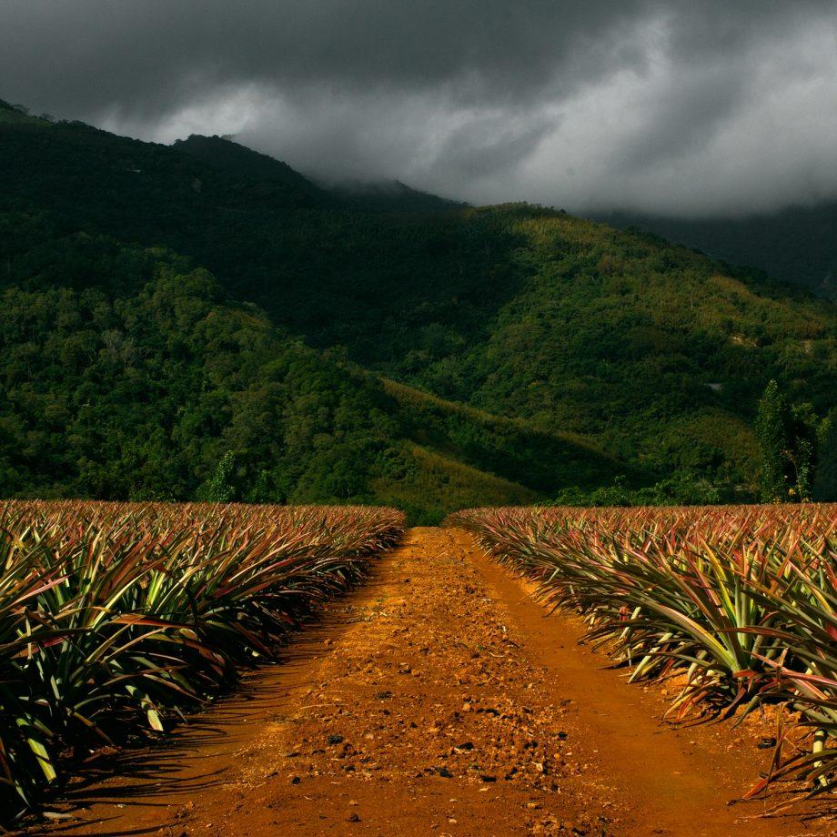 pineapple-dirt-road-john-foust-46377